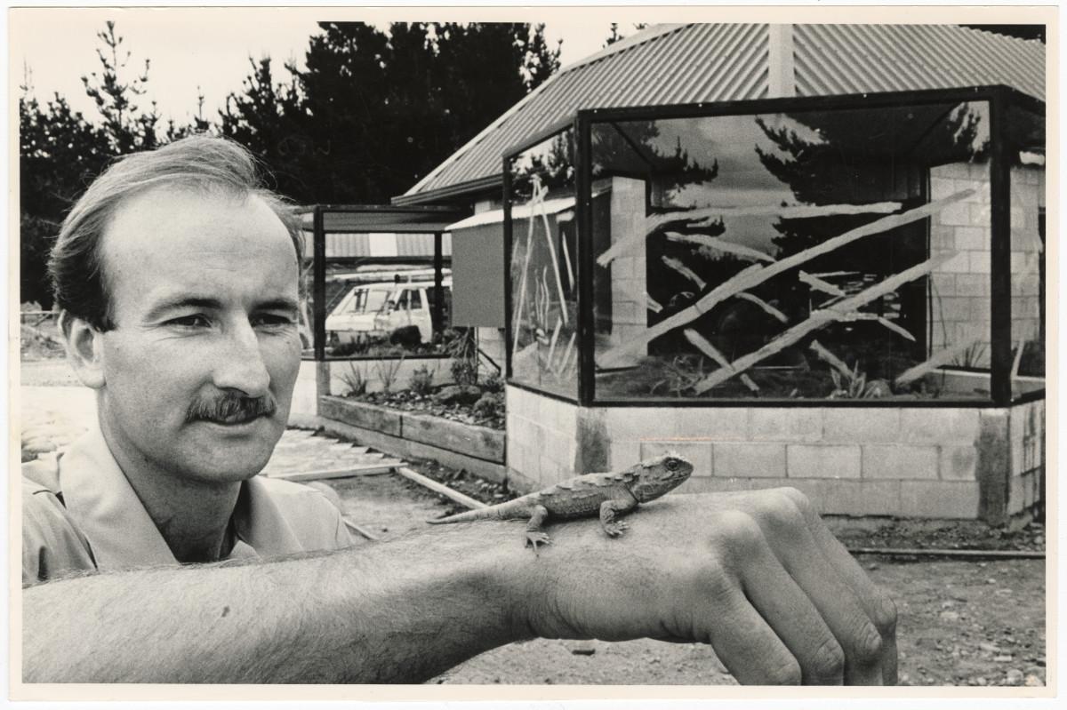 Tuatara at Orana Park reptile house