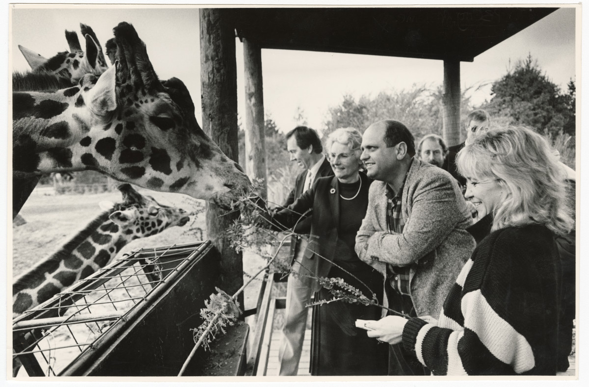 Giraffes at Orana Park. 27 July 1987. Christchurch Star Archive. In copyright. CCL-StarP-01543A.